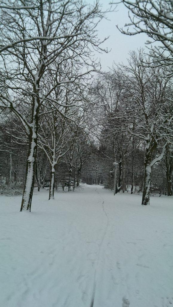 sneeuw-in-bos